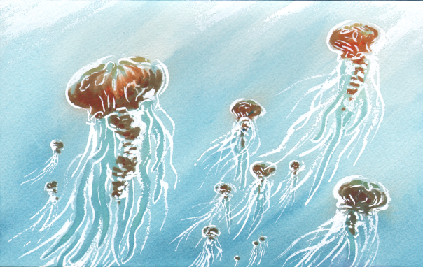 jellyfish_2